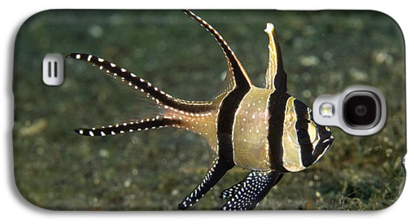 Under Water. Nature Galaxy S4 Cases - Banggai Cardinalfish Galaxy S4 Case by Matthew Oldfield