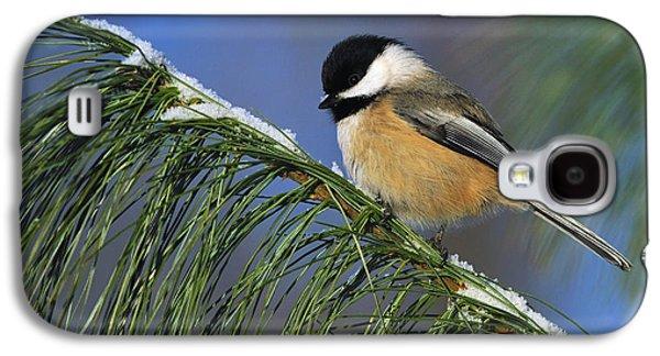 Wildlife Celebration Galaxy S4 Cases - Black-Capped Chickadee Galaxy S4 Case by Tony Beck