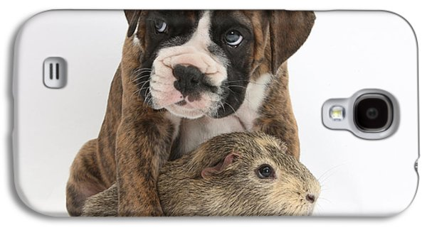 House Pet Galaxy S4 Cases - Boxer Puppy And Guinea Pig Galaxy S4 Case by Mark Taylor