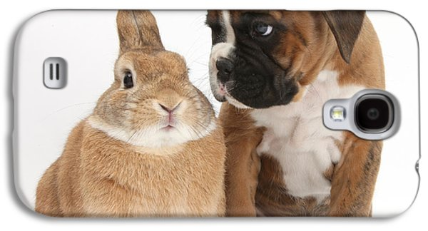 Boxer Puppy Galaxy S4 Cases - Boxer Puppy And Netherland-cross Rabbit Galaxy S4 Case by Mark Taylor