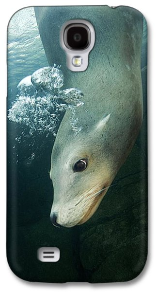 California Sea Lions Galaxy S4 Cases - California Sea Lion Galaxy S4 Case by Alexis Rosenfeld