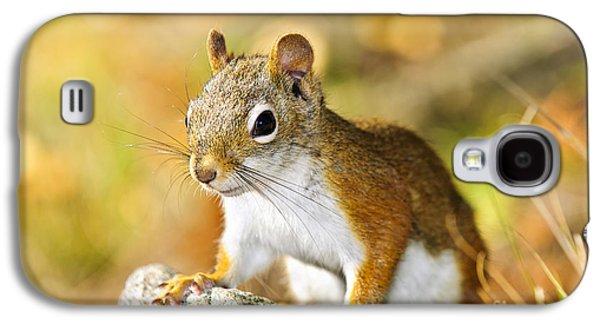 Cute Red Squirrel Closeup Galaxy S4 Case by Elena Elisseeva