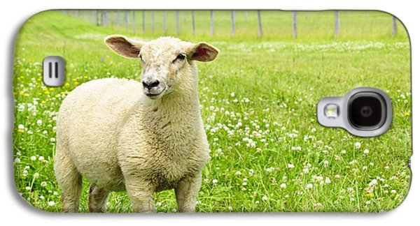 Green Galaxy S4 Cases - Cute young sheep Galaxy S4 Case by Elena Elisseeva