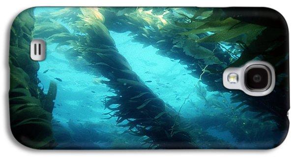 Algal Galaxy S4 Cases - Giant Kelp Galaxy S4 Case by Georgette Douwma