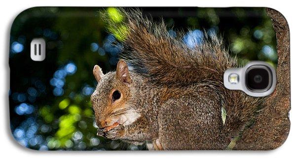 Gray Squirrel Galaxy S4 Case by Fabrizio Troiani