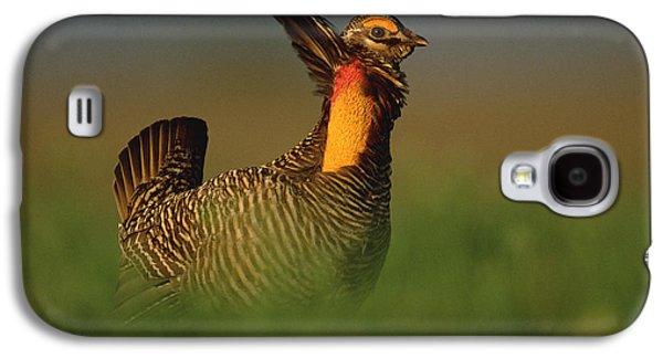 Wildlife Celebration Galaxy S4 Cases - Greater Prairie Chicken Male Galaxy S4 Case by Tim Fitzharris
