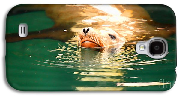 California Sea Lions Galaxy S4 Cases - Hello Galaxy S4 Case by Cheryl Young