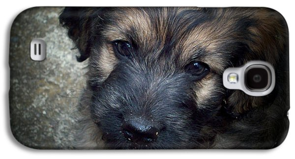 Puppies Digital Galaxy S4 Cases - Iggy Galaxy S4 Case by Robert Orinski