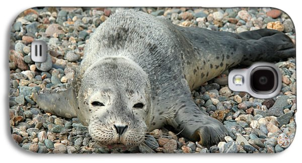 Ocean Mammals Galaxy S4 Cases - Injured Harbor Seal Galaxy S4 Case by Ted Kinsman