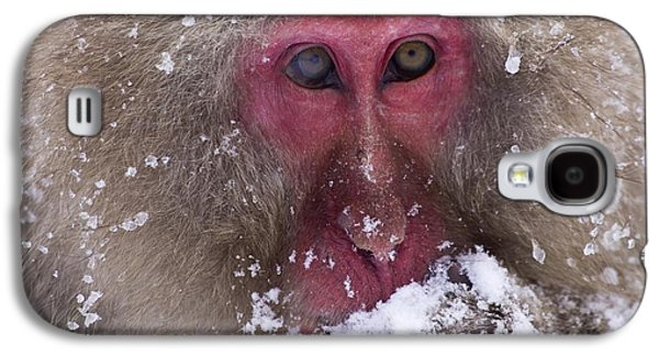 Sit-ins Galaxy S4 Cases - Japanese Snow Monkey Galaxy S4 Case by Natural Selection Anita Weiner