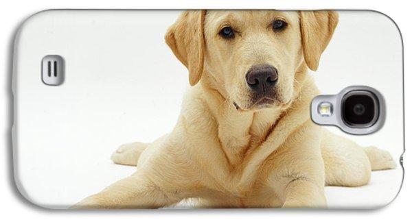 Mixed Labrador Retriever Galaxy S4 Cases - Labrador X Golden Retriever Puppy Galaxy S4 Case by Jane Burton