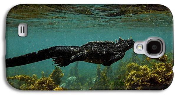 Recently Sold -  - Alga Galaxy S4 Cases - Marine Iguana Amblyrhynchus Cristatus Galaxy S4 Case by Pete Oxford