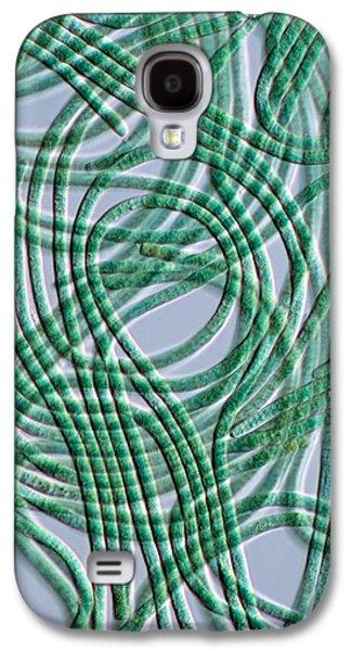 Prokaryote Galaxy S4 Cases - Oscillatoria Cyanobacteria, Dic Image Galaxy S4 Case by Sinclair Stammers