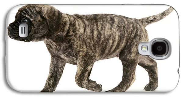 Dog Trots Galaxy S4 Cases - Puppy Trotting Galaxy S4 Case by Jane Burton