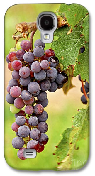 Wine Galaxy S4 Cases - Red grapes Galaxy S4 Case by Elena Elisseeva
