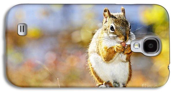 Red Squirrel Galaxy S4 Case by Elena Elisseeva