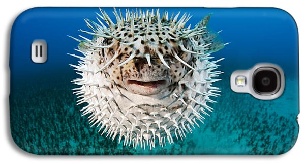 Porcupine Fish Galaxy S4 Cases - Spotted Porcupinefish Galaxy S4 Case by Dave Fleetham