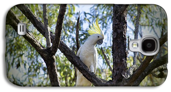 Sulphur Crested Cockatoo Galaxy S4 Case by Douglas Barnard