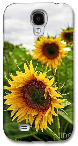 Rural Scenes Photographs Galaxy S4 Cases - Sunflower field Galaxy S4 Case by Elena Elisseeva