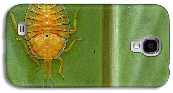 New Britain Galaxy S4 Cases - Tessaratomid Nymph Papua New Guinea Galaxy S4 Case by Piotr Naskrecki
