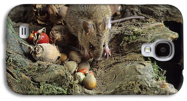 Food Stores Galaxy S4 Cases - Wood Mouse Feeding Galaxy S4 Case by David Aubrey