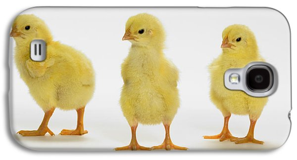Three Chicks Galaxy S4 Cases - Yellow Chicks. Baby Chickens Galaxy S4 Case by Thomas Kitchin & Victoria Hurst