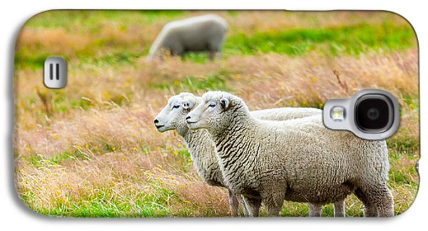 Pastureland Galaxy S4 Cases - Sheeps Galaxy S4 Case by MotHaiBaPhoto Prints