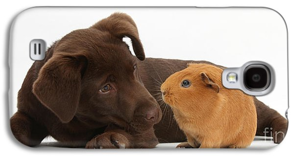 Mixed Labrador Retriever Galaxy S4 Cases - Puppy And Guinea Pig Galaxy S4 Case by Mark Taylor