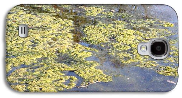 Alga Galaxy S4 Cases - Algae Bloom In A Pond Galaxy S4 Case by Photo Researchers, Inc.