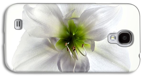Stigma Galaxy S4 Cases - Amaryllis Galaxy S4 Case by Jane Rix