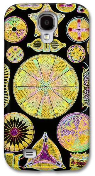 Plankton Galaxy S4 Cases - Art Of Diatom Algae (from Ernst Haeckel) Galaxy S4 Case by Mehau Kulyk