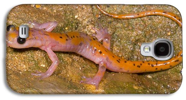 Morph Galaxy S4 Cases - Cave Salamander Galaxy S4 Case by Dante Fenolio