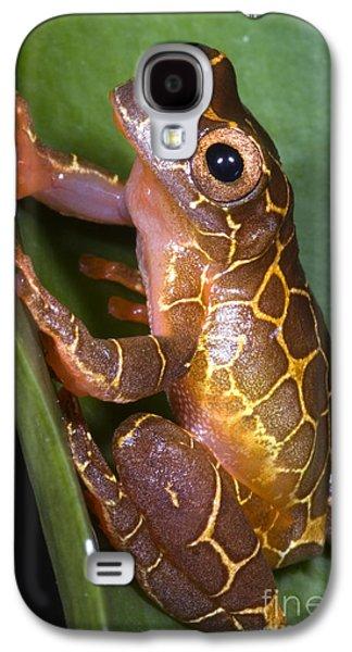 Anurans Galaxy S4 Cases - Clown Tree Frog Galaxy S4 Case by Dante Fenolio