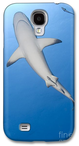 New Britain Galaxy S4 Cases - Gray Reef Shark With Remora, Papua New Galaxy S4 Case by Steve Jones