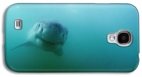 Carcharadon Carcharias Photographs Galaxy S4 Cases - Great White Shark Galaxy S4 Case by Alexis Rosenfeld