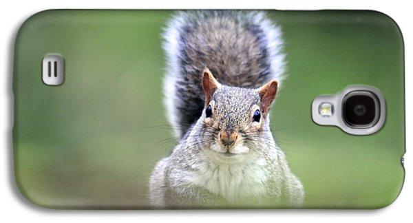Grey Squirrel Galaxy S4 Case by Colin Varndell