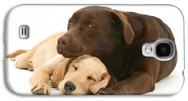 Mixed Labrador Retriever Galaxy S4 Cases - Labradoodle And Labrador Retriever Galaxy S4 Case by Jane Burton