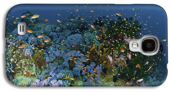 Schools Of Fish Galaxy S4 Cases - Reef Scene With Coral And Fish Galaxy S4 Case by Mathieu Meur