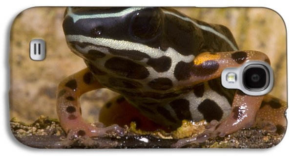 Frogs Photographs Galaxy S4 Cases - Rio Madeira Poison Frog Galaxy S4 Case by Dante Fenolio