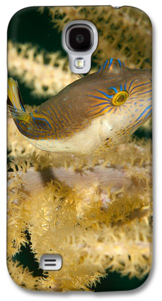 Porcupine Fish Galaxy S4 Cases - Puffer Acrobatics Galaxy S4 Case by Jean Noren