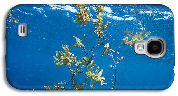 Alga Galaxy S4 Cases - Tropical Seaweed Galaxy S4 Case by Alexis Rosenfeld