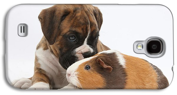 Boxer Puppy Galaxy S4 Cases - Boxer Puppy And Guinea Pig Galaxy S4 Case by Mark Taylor