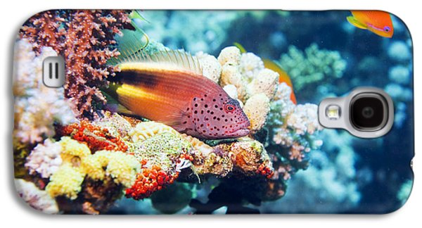 Under Water. Nature Galaxy S4 Cases - Freckled Hawkfish Galaxy S4 Case by Georgette Douwma