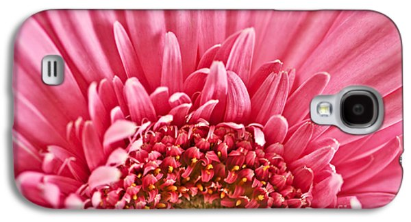 Vibrant Galaxy S4 Cases - Gerbera flower Galaxy S4 Case by Elena Elisseeva