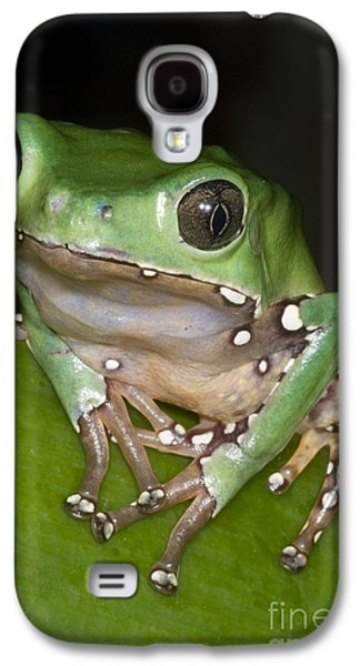 Frogs Photographs Galaxy S4 Cases - Giant Monkey Frog Galaxy S4 Case by Dante Fenolio