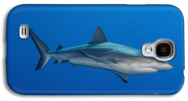 New Britain Galaxy S4 Cases - Gray Reef Shark, Kimbe Bay, Papua New Galaxy S4 Case by Steve Jones