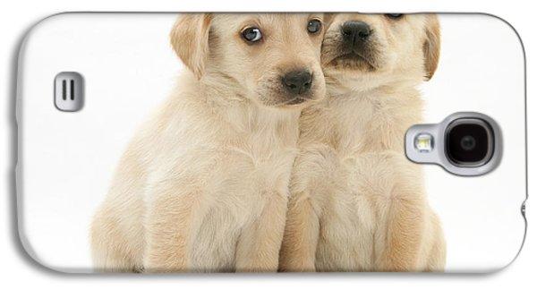 Mixed Labrador Retriever Galaxy S4 Cases - Labrador Retriever Puppies Galaxy S4 Case by Jane Burton