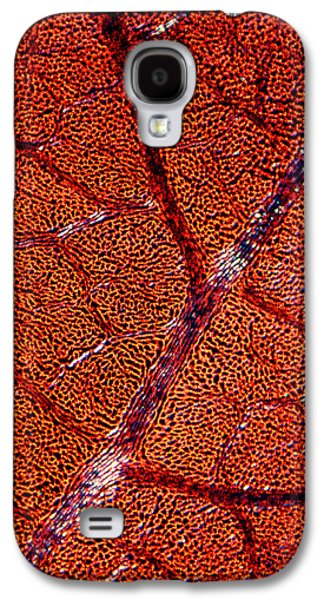 Indian Ink Galaxy S4 Cases - Leaf Anatomy, Light Micrograph Galaxy S4 Case by Dr Keith Wheeler