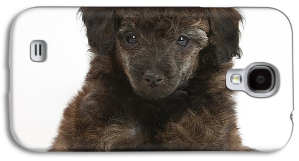 House Pet Galaxy S4 Cases - Puppy Galaxy S4 Case by Mark Taylor