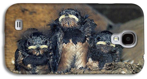 Hirundo Galaxy S4 Cases - Swallow Chicks Galaxy S4 Case by Georgette Douwma
